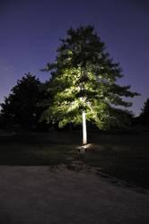 beleuchteter Baum im Park der Sinne
