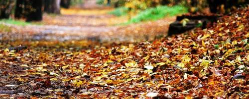Weg mit Bäumen rechts und links, in der Mitte liegt gelb verfärbtes Laub