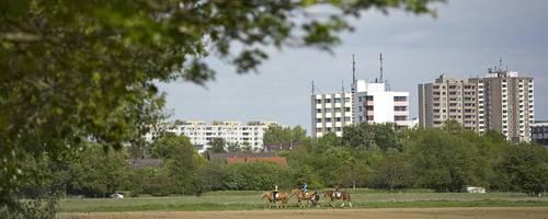 Die Wiesen und Felder der Leineaue - ganz nah an der Stadt [(c) Florian Wallenstein]