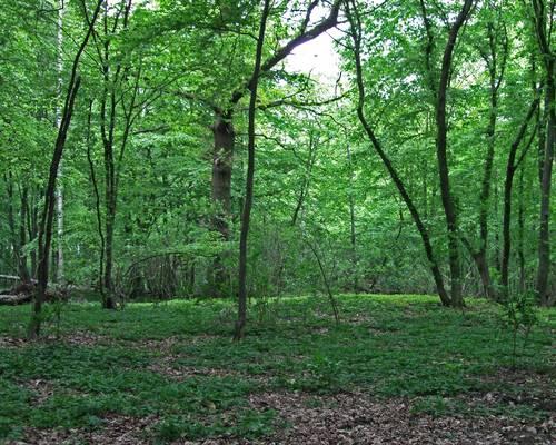 Mastbruchholz