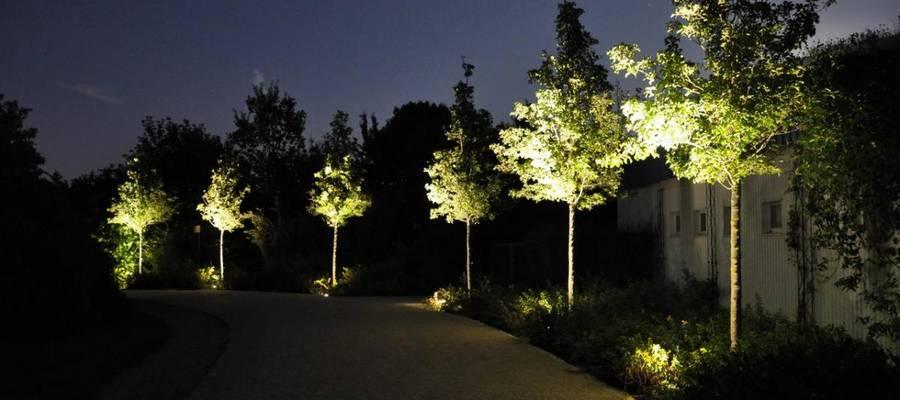 Beleuchtete Bäume bei Nacht im Park der Sinne