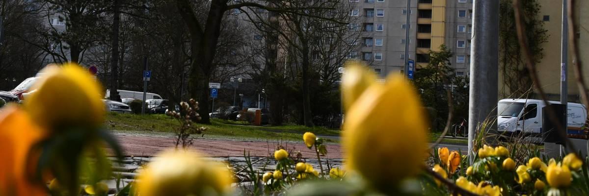 Gelbe Blüten, im Hintergrund das Rathaus
