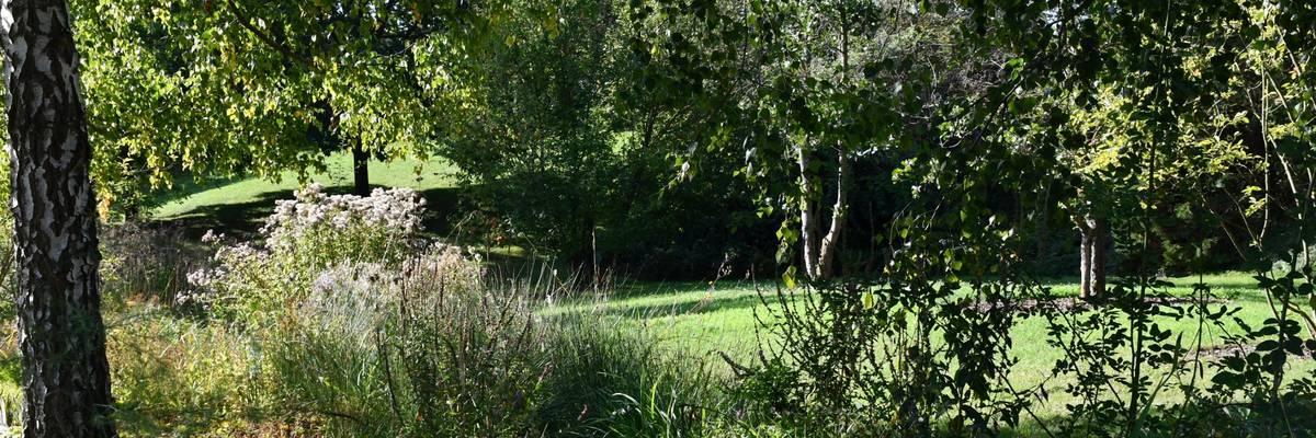 Grüne Bäume an einem kleinen Bachlauf mit einem Weg im Hintergrund