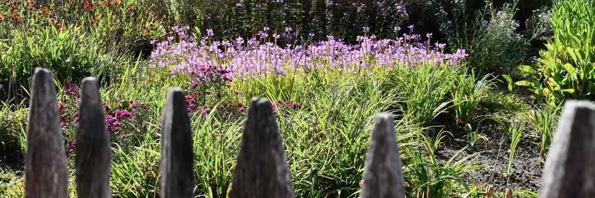 Bunt blühendes Blumenbeet hinter einem Holzzaun.