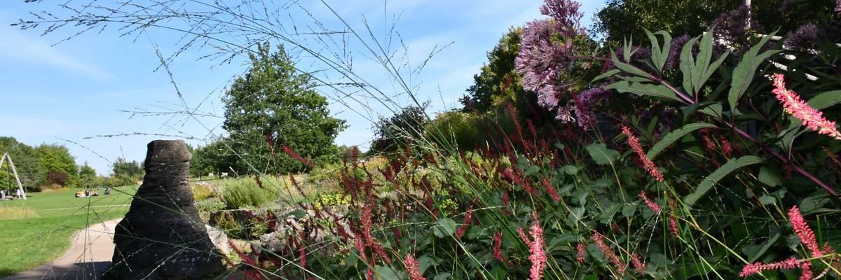 Herbstliche Gräser und Blüten, im Hintergrund ein Sandweg