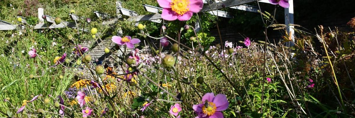 Pinke Blüten an einem kleinen Teich
