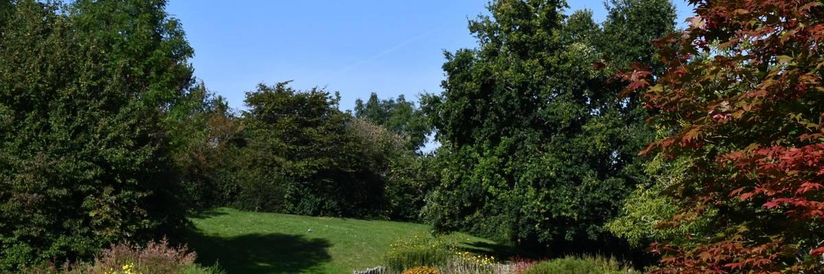 Blick über die herbtslichen Beete, rechts ein Baum mit roten Blättern