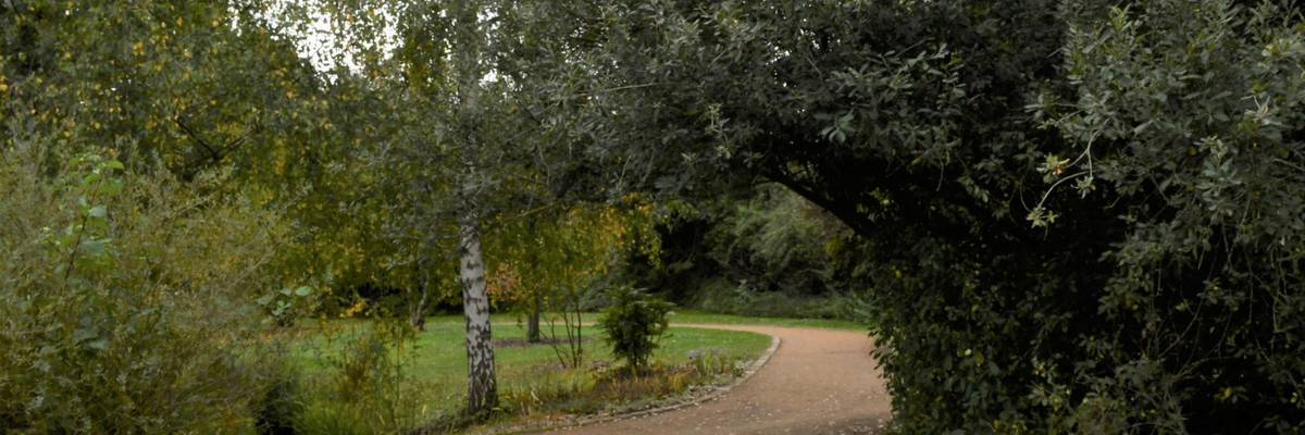 Kurviger Weg durch Bäume. Auf dem Weg liegen gelbe Herbstblätter.