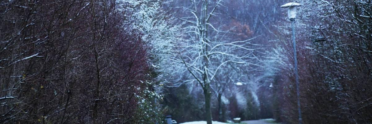 Blick auf Bäume mit Schnee und einen Weg