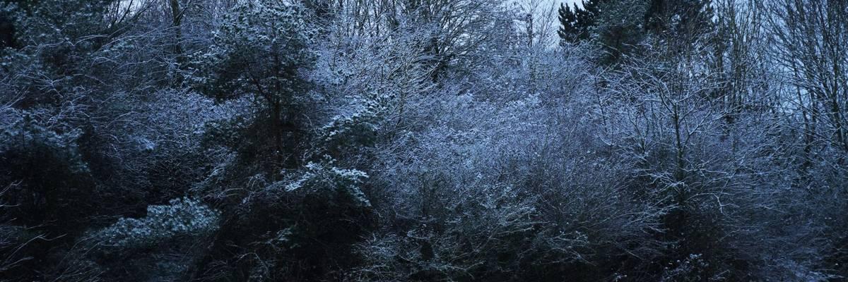 Blick über leicht verschneite Bäume und eine Wiese