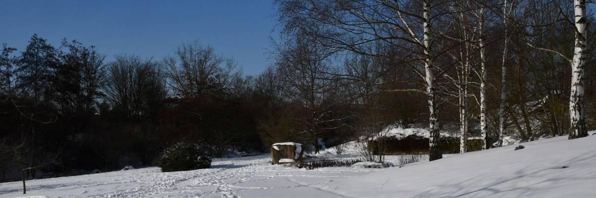 Verschneiter Weg, an der rechten Seite befindet sich mehrere Birken auf einem Hügel.