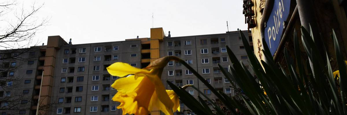 Eine gelbe Osterglocke im Vordergrund. Im Hintergrund ein Mehrfamilienhaus.
