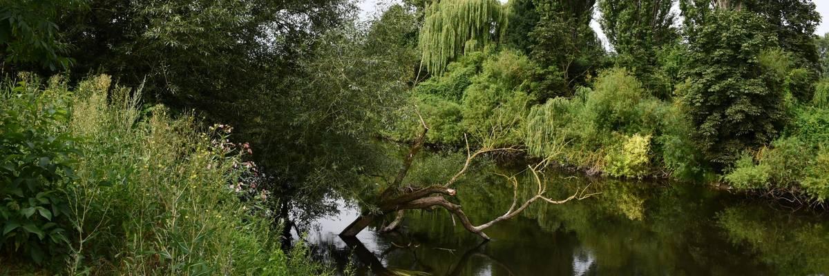 Der Fluß Leine fließt am Leinaschrand. Rechts und links des Ufers sind große Bäume und Strauchwerk zu sehen. ©Stadt Laatzen