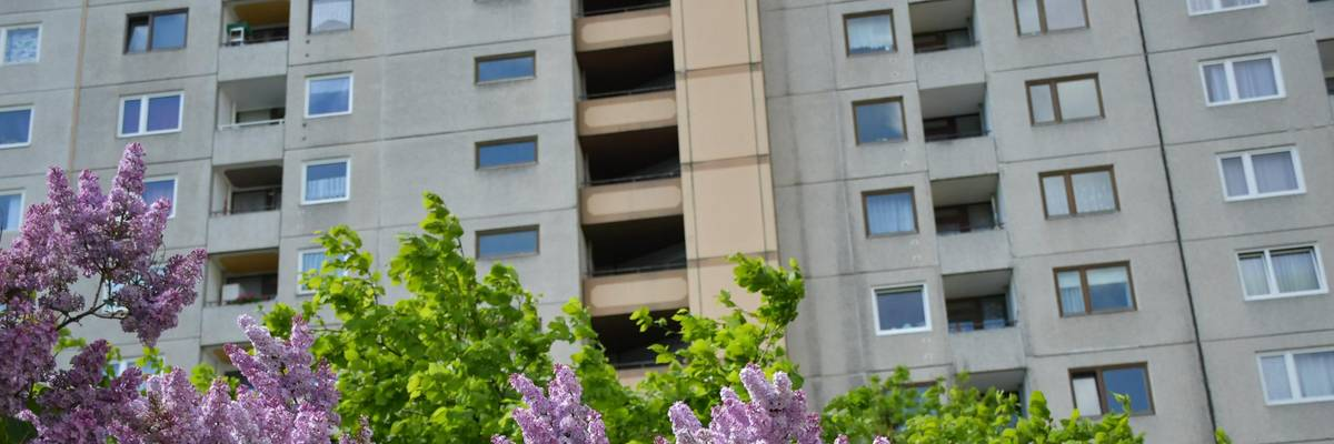 Blühender Flieder, dahinter ist ein mehrstöckiges Wohnhaus zu sehen.
