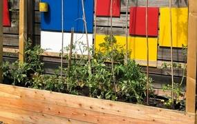 Hochbeet mit Tomatenpflanzen ©Stadt Laatzen