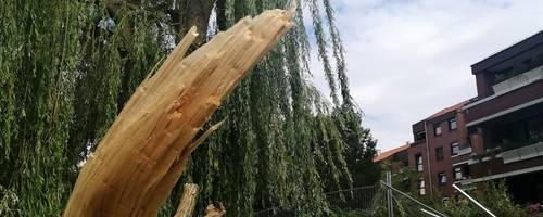 Im Vordergrund liegt der herabgestürzte, abgebrochene Ast einer Weide. Im Hintergrund der große Baum mit der Bruchstelle und ein Haus.