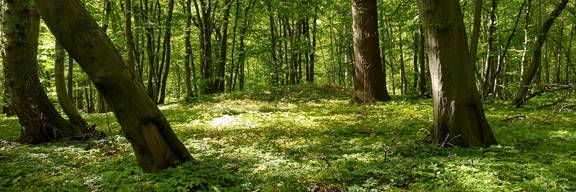 Hügelgrab im Mastbruchholz