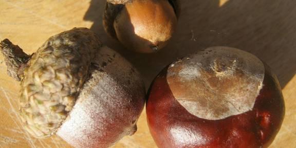 chestnut 252551 1920