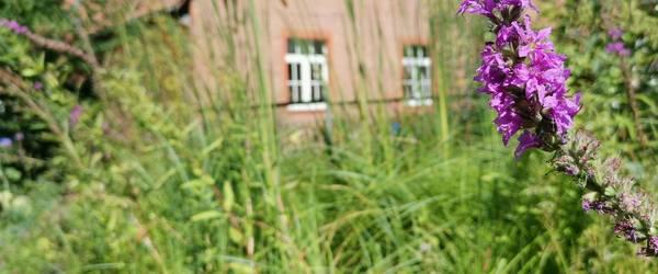 Garten des NABU Laatzen mit lilaner Blume im Vordergrund ©NABU Laatzen