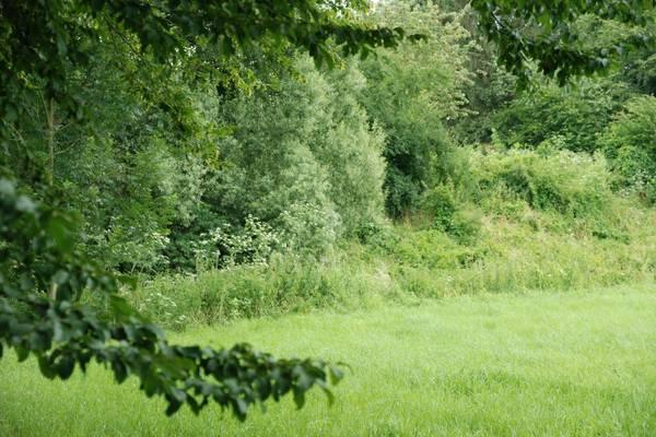 Menu: Stadtgrün / Biodiversität