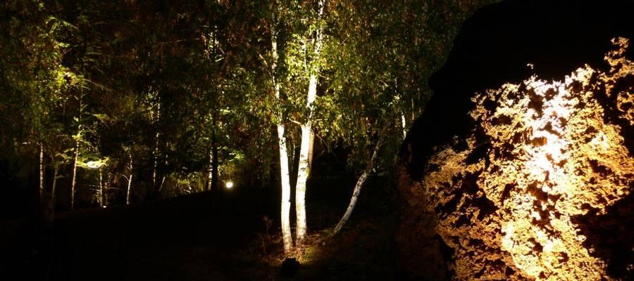beleuchtete Birke im Park der Sinne