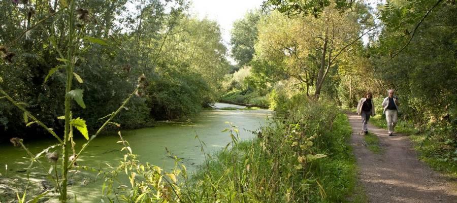 Fluß fließt an Bäumen vorbei