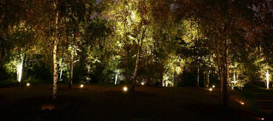 beleuchtete Bäume im Park der Sinne